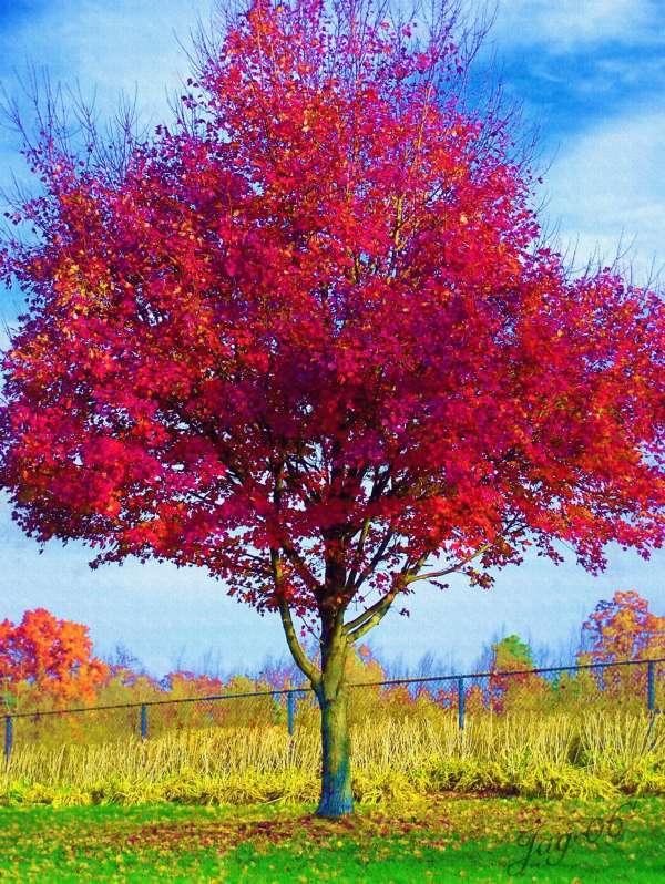 arbreforain.jpg